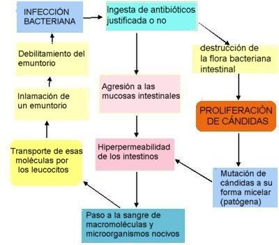 CANDIDIASIS INTESTINAL (2ª parte),CANDIDIASIS CRÓNICA